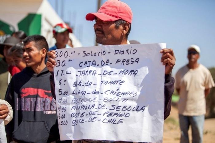 Jornaleros trabajan bajo protesta, luego de que durante todo este año han realizado paros y marchas de protesta por las condiciones laborales que padecen. Foto: ZETA, especial para SinEmbargo.