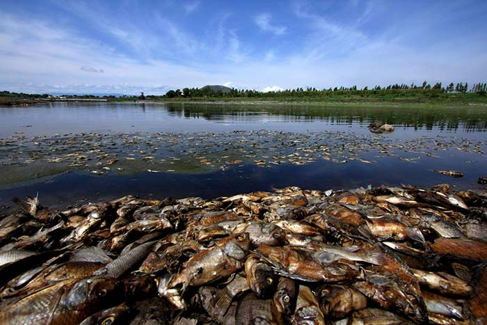 El proyecto muestra el desastre ecológico que se vive en el país. Foto: Héctor Guerrero.