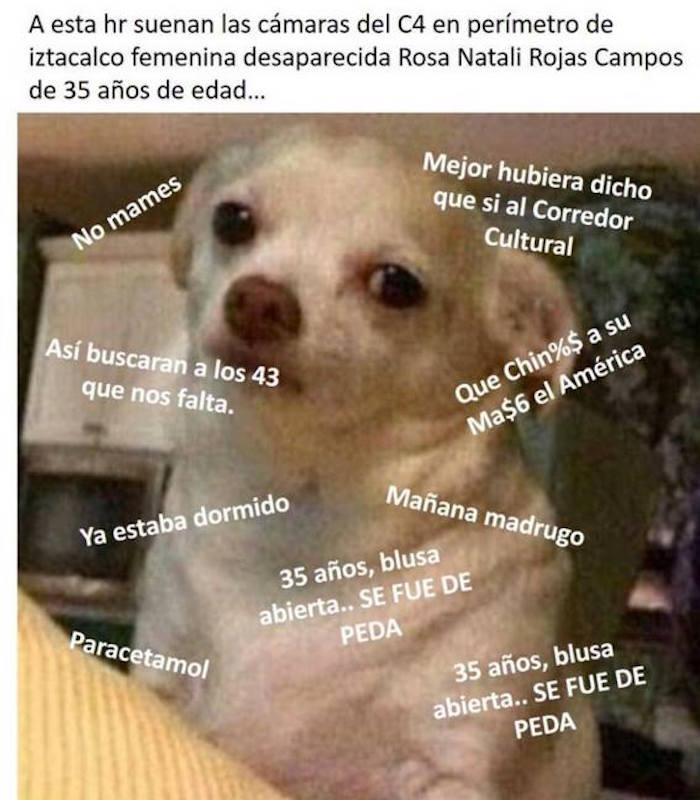 ChihuahuaEnojado