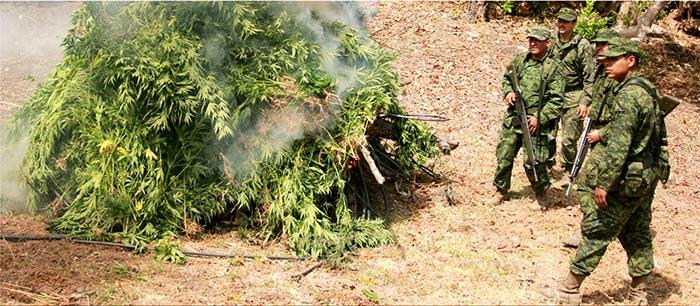 Soldados con el rifle G-3 queman marihuana en la Sierra Mdre Occidental. Imagen tomada de la revista electrónica La Gran Fuerza de México, editada por la Secretaría de la Defensa Nacional