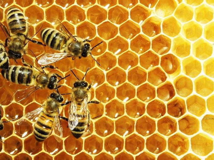 Casi toda la población de abejas está compuesta por hembras. Foto: Shutterstock.