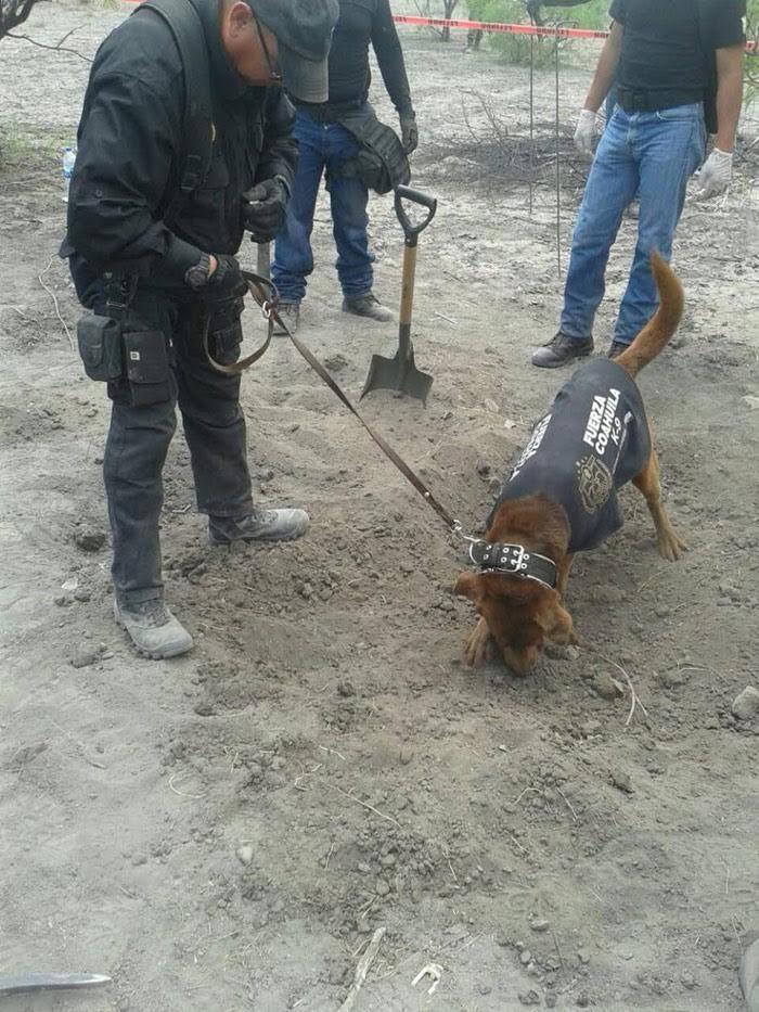La búsqueda de los restos en el ejidio Patrocinio. Foto: Vanguardia