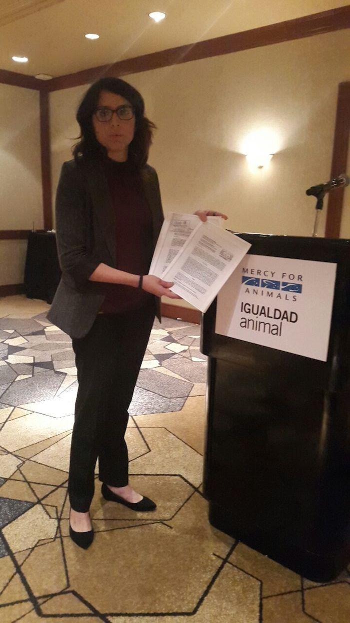 Ayer, la organización Igualdad Animal presentó una denuncia ante la Sagarpa por violaciones a las normas 033 y 051. Foto: SinEmbargo