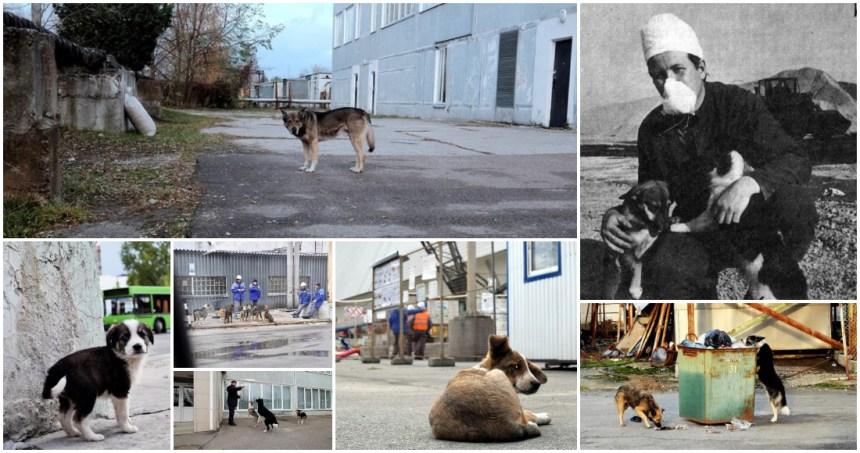 perritos chernobyl - Rescatista de la explosión en Chernóbil se suicida luego de ver la serie producida por HBO