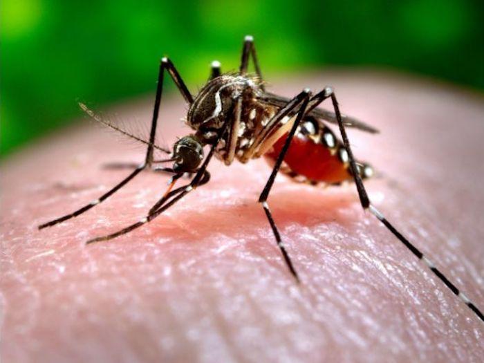 mosco - Los mosquitos han matado más que cualquier enfermedad en la historia de la humanidad: científicos