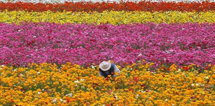 p ap - ¿Cuándo comienza la primavera en México?, ¿qué la provoca?, ¿cómo ocurre este fenómeno natural?