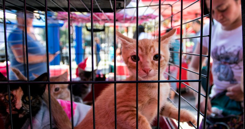 gatos - Perros callejeros son olvidados por COVID-19; un centro de CdMx promueve adopciones a distancia