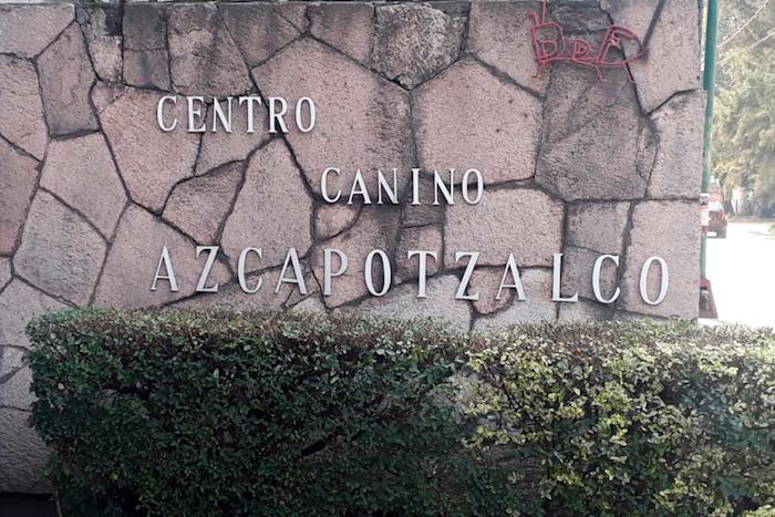 perritosabandonados covid19 especial00 - Perros callejeros son olvidados por COVID-19; un centro de CdMx promueve adopciones a distancia
