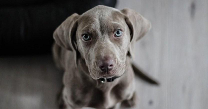perro 1 - Perros callejeros son olvidados por COVID-19; un centro de CdMx promueve adopciones a distancia