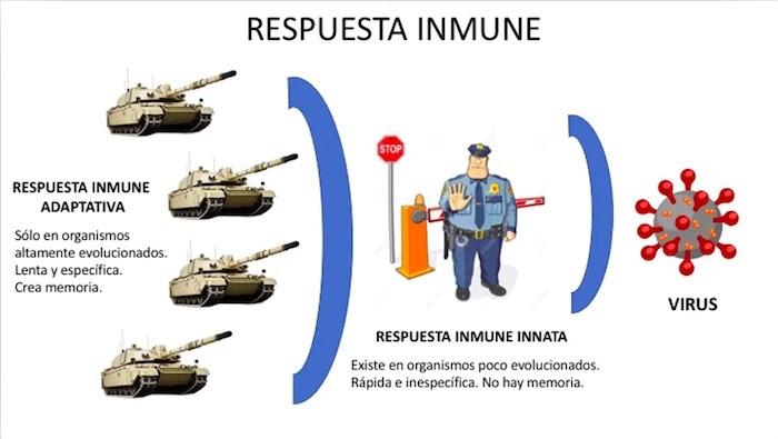 Infografía inmunidad covid-19