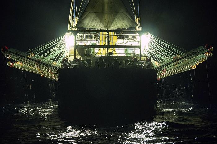 pesca de calamar5
