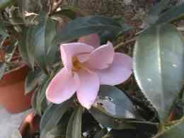 garden-12a