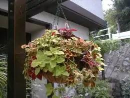 garden-31