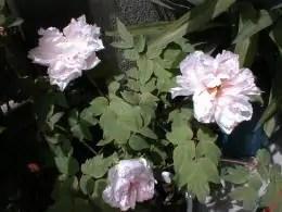 garden-3b