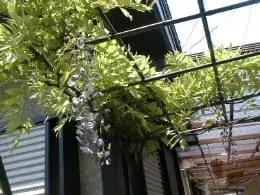 garden-5b