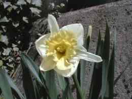 garden-9a