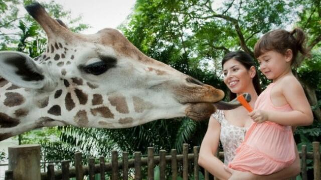 Go Wild at Singapore Zoo