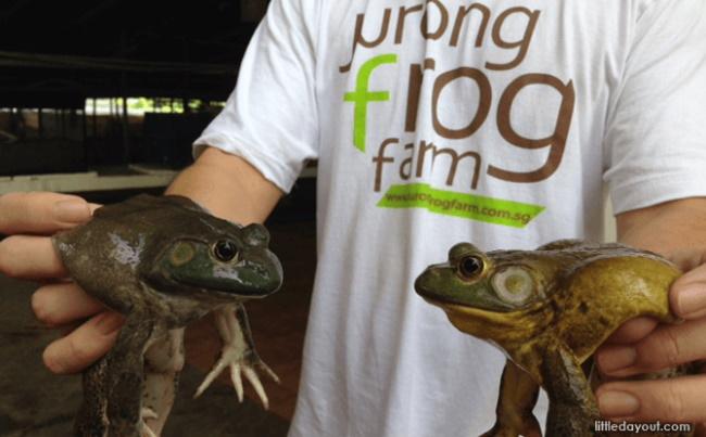 Jurong-Frog-Farm