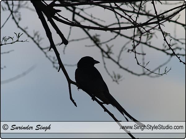 Birds Photographer, India