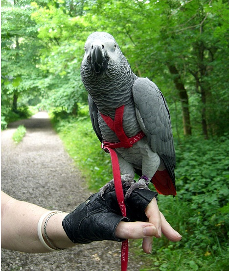 Best Bird Harnesses With Leash