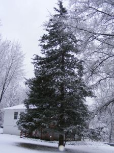 Christmas Tree - Snow Covered