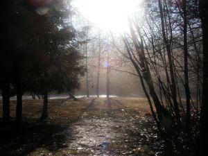 sun beam through darkened woods.