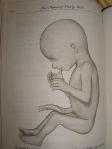 Baby at 15 weeks - See him suck his thumb?