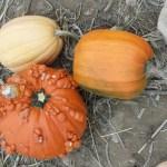 Thanksgiving, Coincidences, & Gratitude