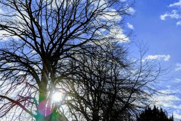 blue-sky-trees-sun