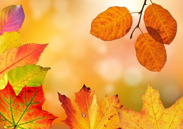 Recetas sin gluten para el otoño