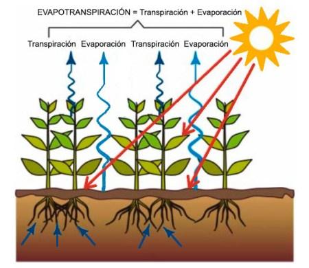 Evapotranspiración en las cubiertas vegetales