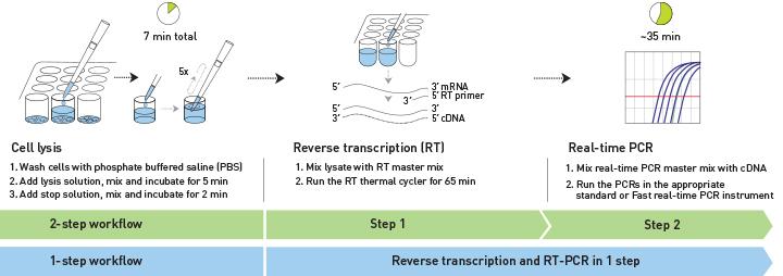 Quy trình ứng dụng Real-time PCR trong khảo sát biểu hiện gen ở tế bào gốc (Nguồn: Internet)