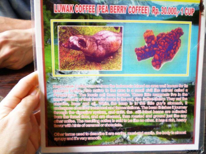la tierra de los dioses - Huerta organica, cerca de Ubud, Bali, Indonesia, Sinmapa.net, café Luwak
