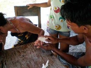 Picadura de erizo en Gili Meno - Indonesia Post: picadura de un erizo