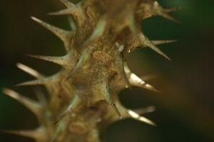 Espinas de una planta en el Río Mekong