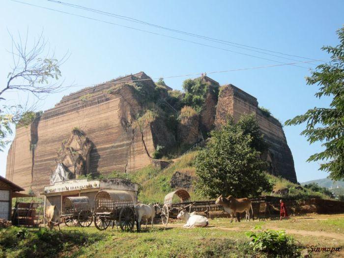 Bueyes en Birmania