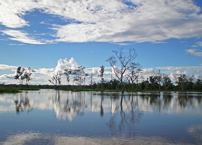 Selva de los Espejos - Pacaya Samiria Amazonas Perú