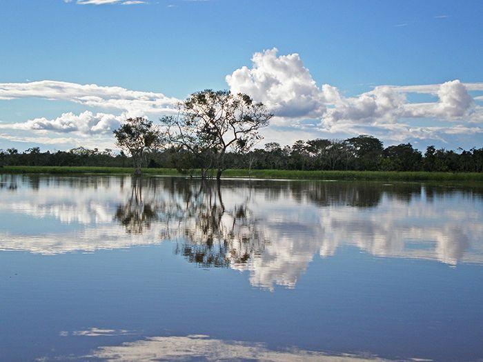 """Reserva nacional Pacaya Samiria - """"La selva de los espejos"""" qué ver y qué hacer en Perú"""