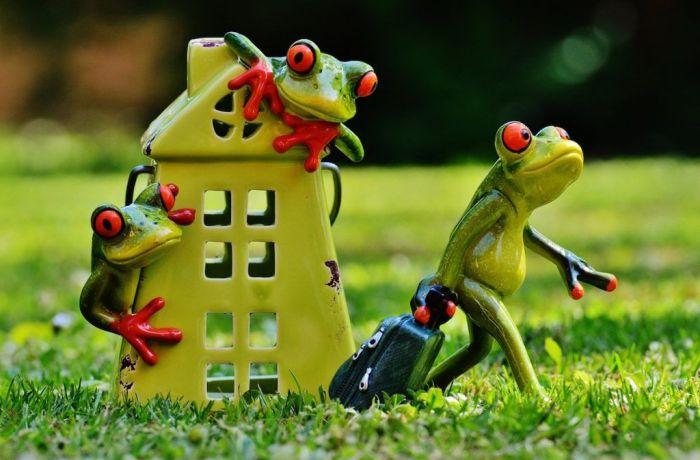 rana-frog-casa-maleta-viajas