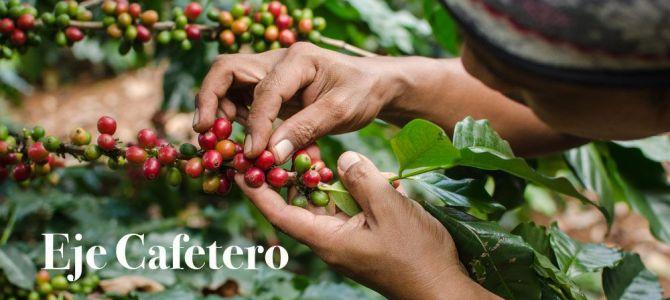Oda al café en el Eje Cafetero colombiano