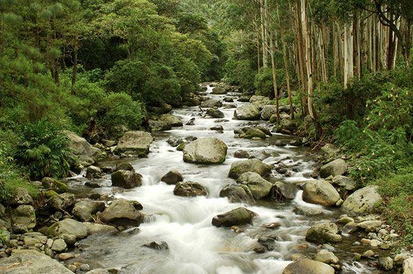 Turismo Panama - qué hacer y qué ver en boquete