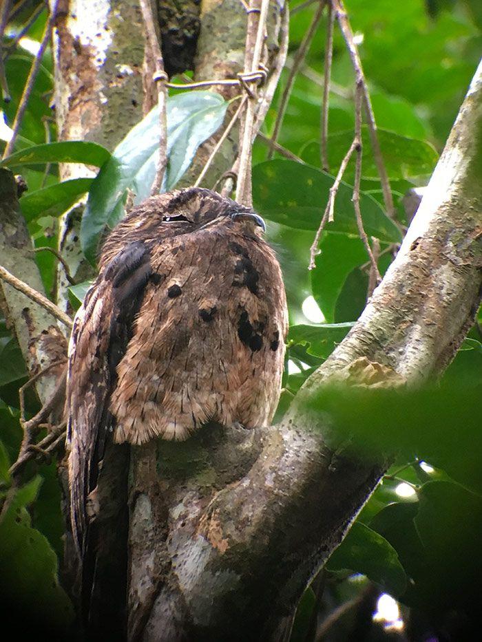 Avistamiento de animales en libertad en el Parque Nacional de Manuel Antonio, Costa Rica