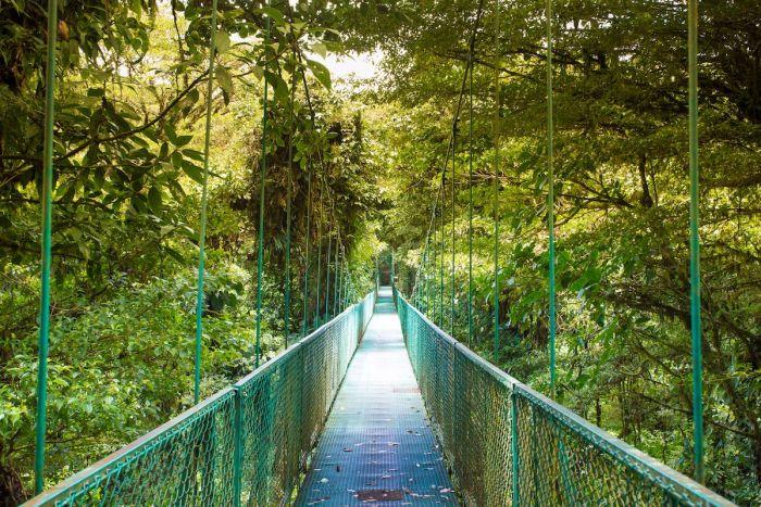 Puente colgante - Qué ver y qué hacer en Monteverde Costa Rica
