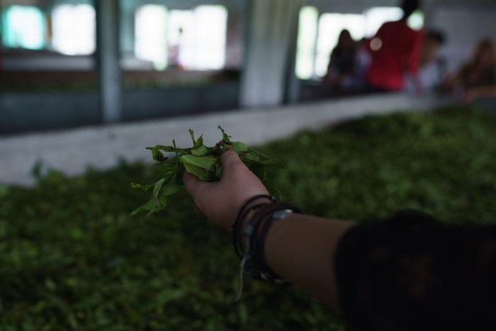 Munnar - Plantaciones de té