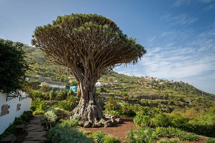 qué ver en Tenerife en una semana
