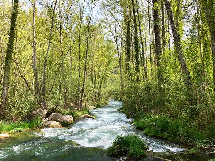 Baño de Bosque en Olba, Comarca de Gúdar Javalambre
