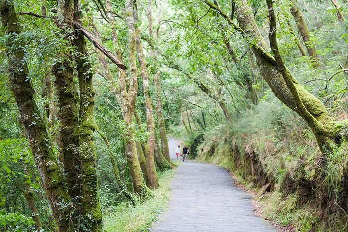 Camino por el Parque Natural Fragas Do Eume