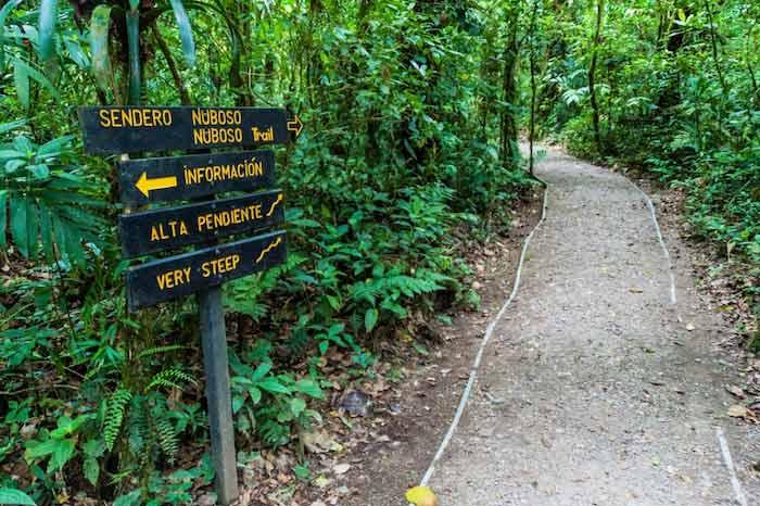 Bosque Nuboso en Monteverde, Costa Rica