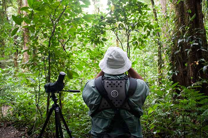 Avistamiento de aves, Monteverde, Costa Rica