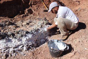 Descubren un extraordinario cementerio de animales de 220 millones de años en San Juan